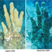 Failure to respond to a coral disease ...